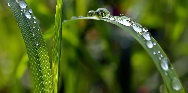 grass-1331703_1920-2